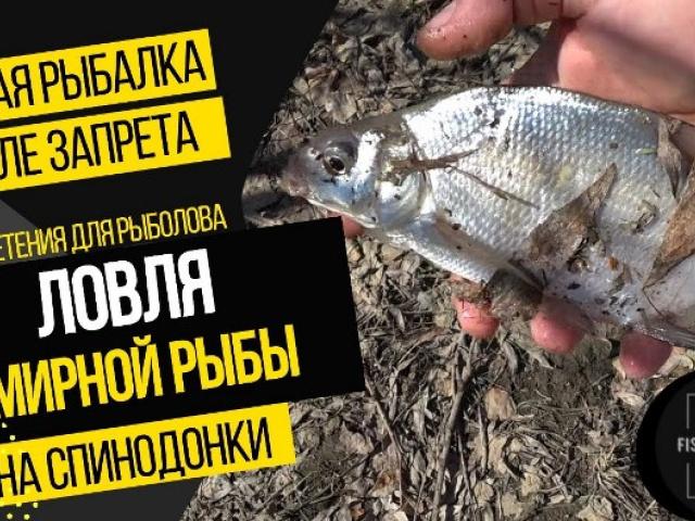 Ловля мирной рыбы на Иртыше на спинодонки. Первая рыбалка после запрета. Отличный отдых. Много клеща