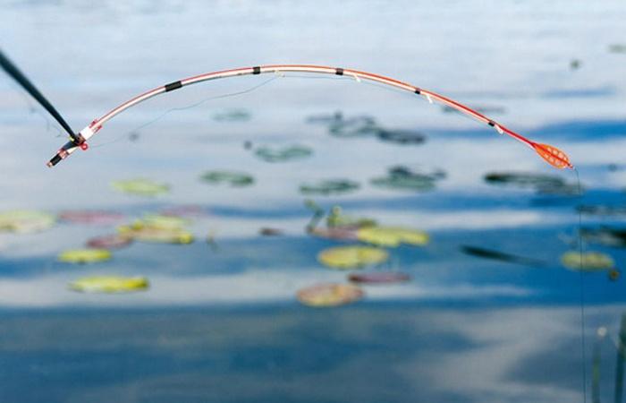Летняя рыбалка на кивок